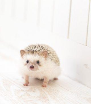 【12/16王様のブランチ放映!】ハリネズミがドールハウスで暮らす?『ちくちくカフェ』渋谷にNewオープン!